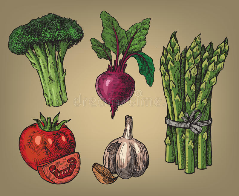 Hand drawn of vegetables royalty free illustration