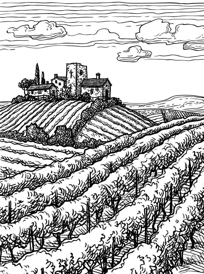 Hand drawn vineyard landscape. Ink sketch. Vintage style vector illustration vector illustration