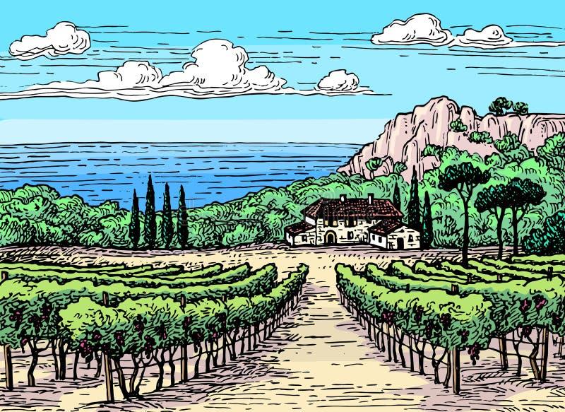 Hand drawn vineyard landscape. Hand drawn ink sketch. Colored vineyard landscape. Vintage style vector illustration stock illustration