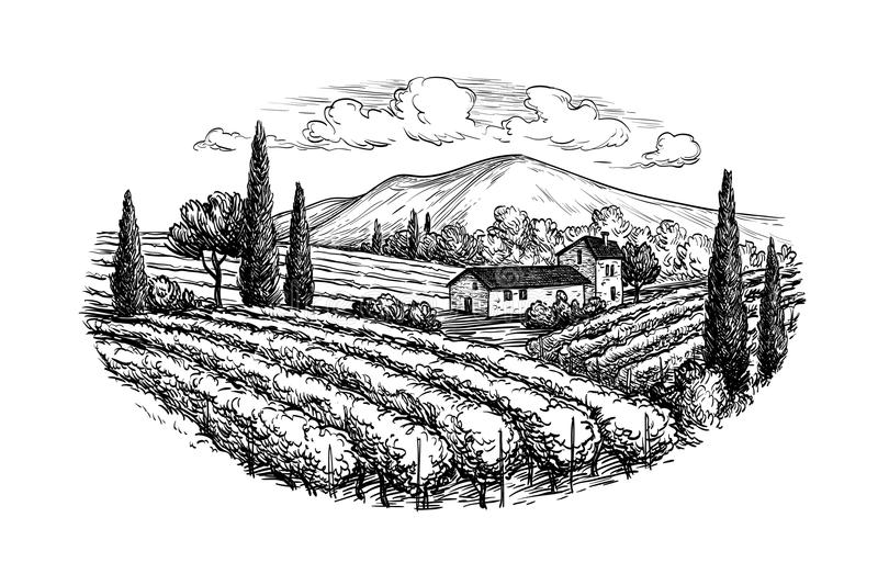 Hand drawn vineyard landscape vector illustration