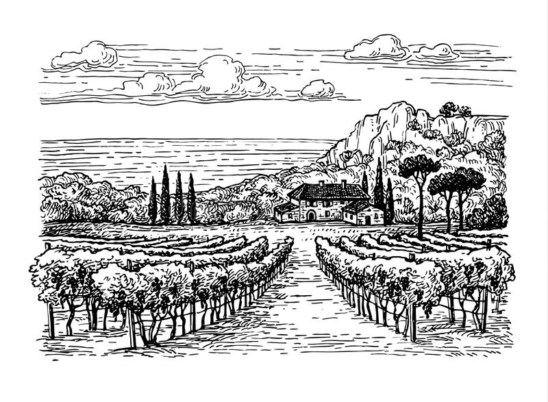 Hand drawn vineyard landscape. Isolated on white background. Vintage style vector illustration royalty free illustration