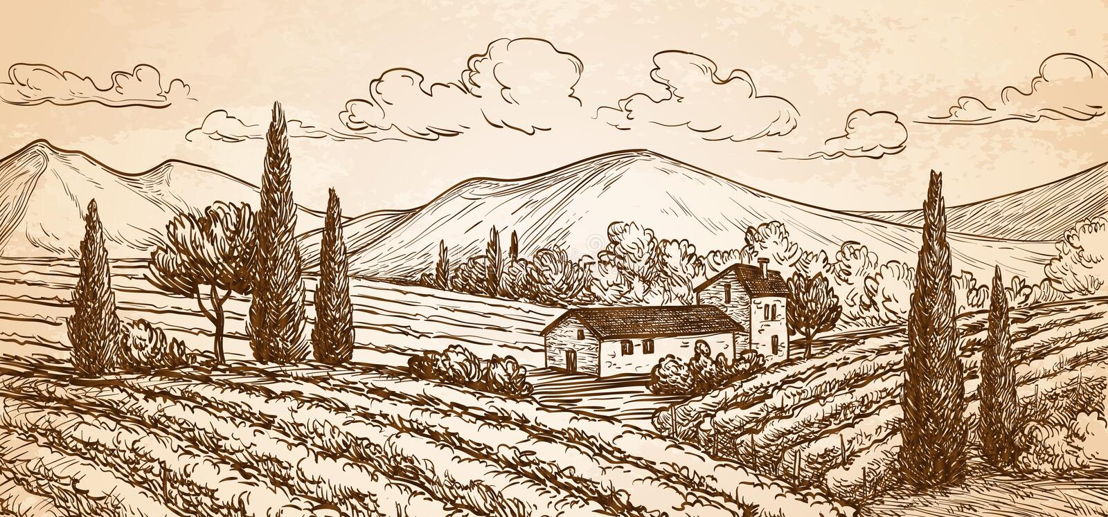 Hand drawn vineyard landscape. royalty free illustration