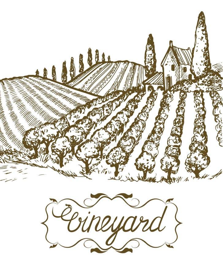 Hand drawn vineyard landscape. Vintage vector illustration. Lettering in frame. Hand drawn vineyard landscape. Vintage vector illustration. Lettering in frame vector illustration
