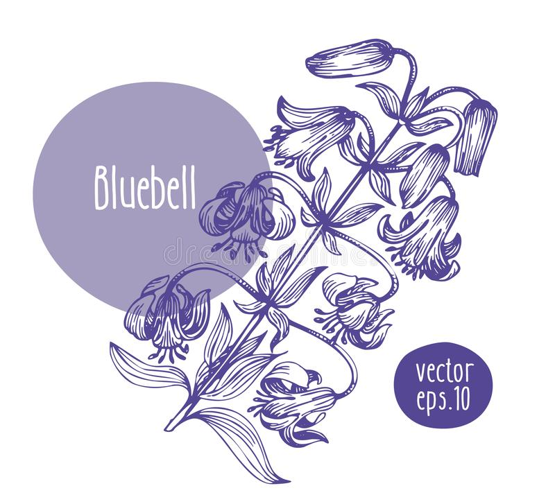 Hand drawn vintage bluebell. Vector blooming flower. Botanical illustration. Can be use for wedding invitations and. Hand drawn retro bluebell. Vector blooming royalty free illustration