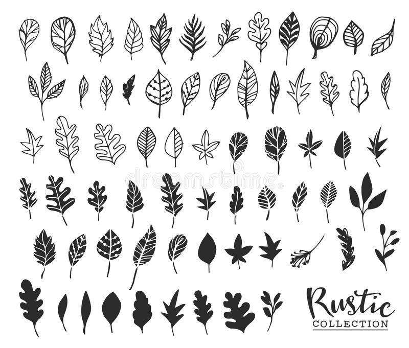 Hand drawn vintage leaves. Rustic decorative vector design vector illustration