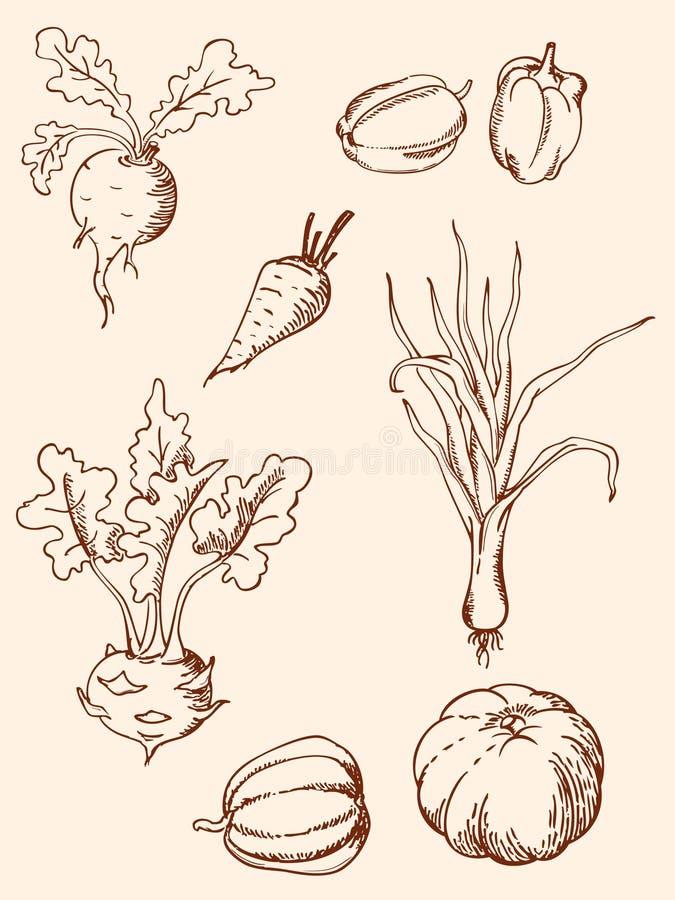Download Hand Drawn Vintage Vegetables Stock Vector - Image: 20444389