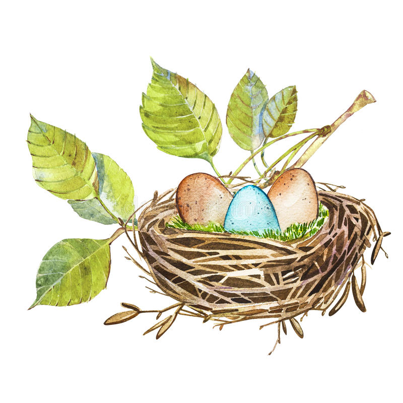 Hand Drawn Watercolor Art Bird Nest With Eggs , Easter