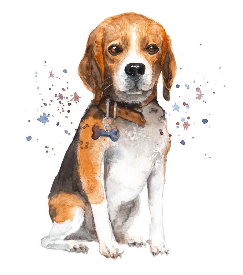 Watercolor dog illustration. Portrait beagle in a collar with a bone pendant. royalty free stock photos