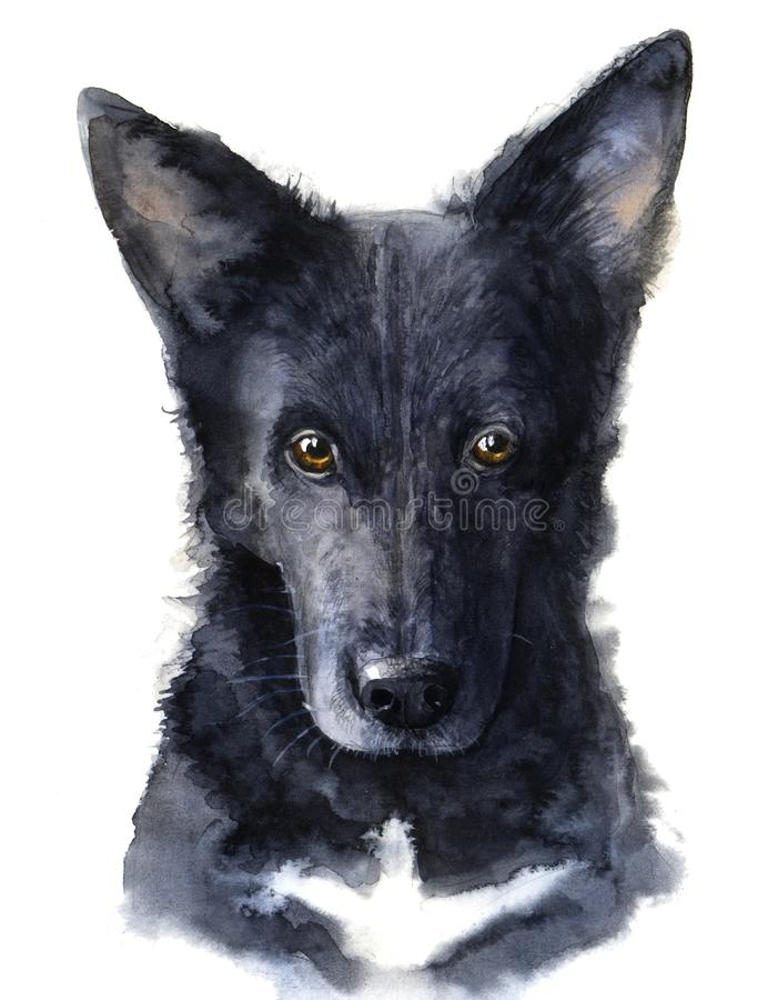 Watercolor dog illustration. Portrait big fluffy black dog. royalty free stock image