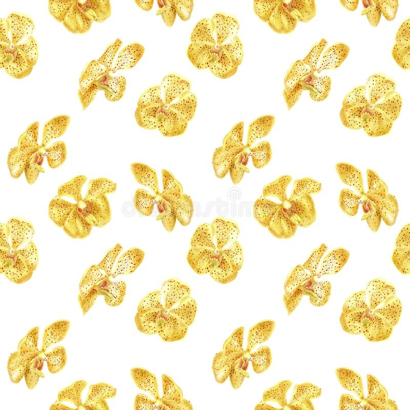 Hand drawn watercolor floral tropical seamless pattern with yellow orchid flower on white background stock illustration