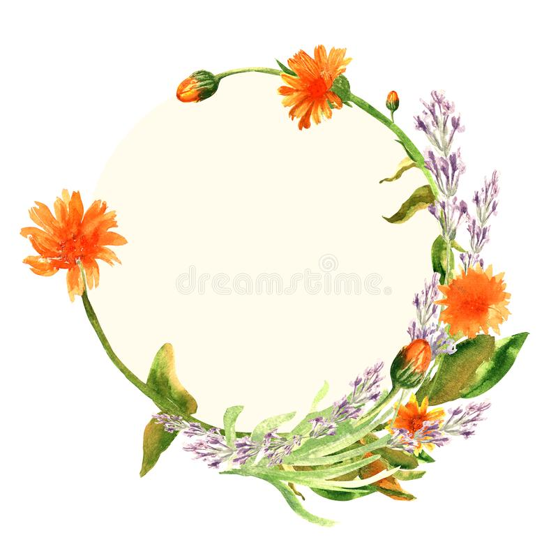 Hand drawn watercolor flower and leaves wreath of calenula officinalis and lavender on a yellow circle background. Design for wrapping, invitation, cards vector illustration