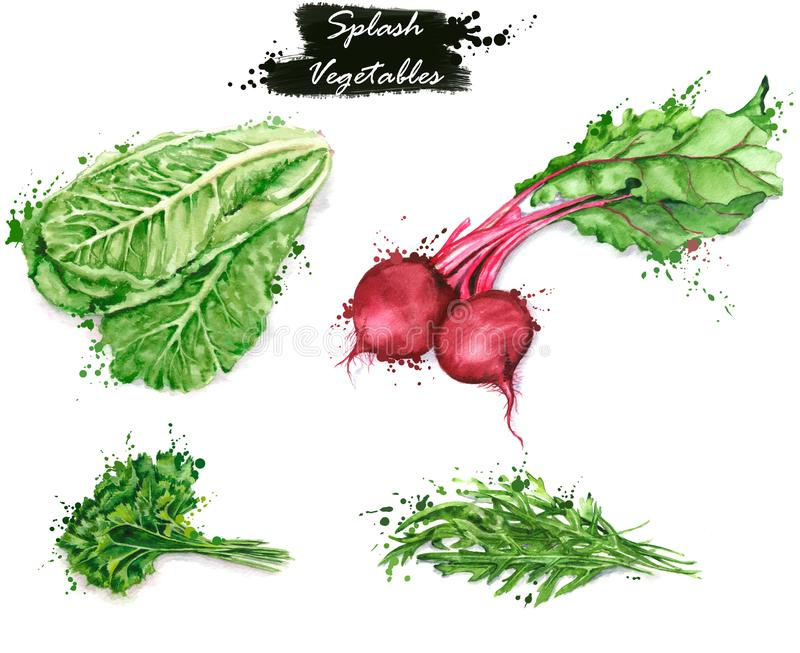 Hand-drawn watercolor food illustrations. Isolated drawings of the fresh vegetables - lettuce, red beet, parsley and arugula royalty free illustration