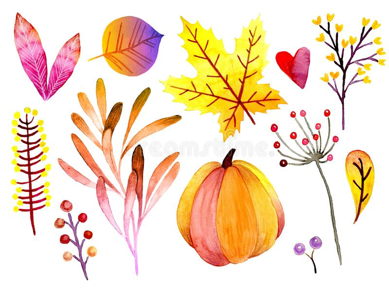 Hand drawn watercolor forest leaves and berries. Isolated icons. Autumn abstract botanical branches. Guelder, pumpkin vector illustration