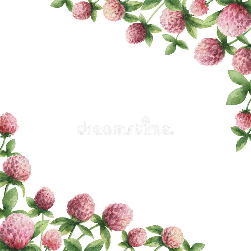 Hand drawn watercolor frame of Red clover. vector illustration