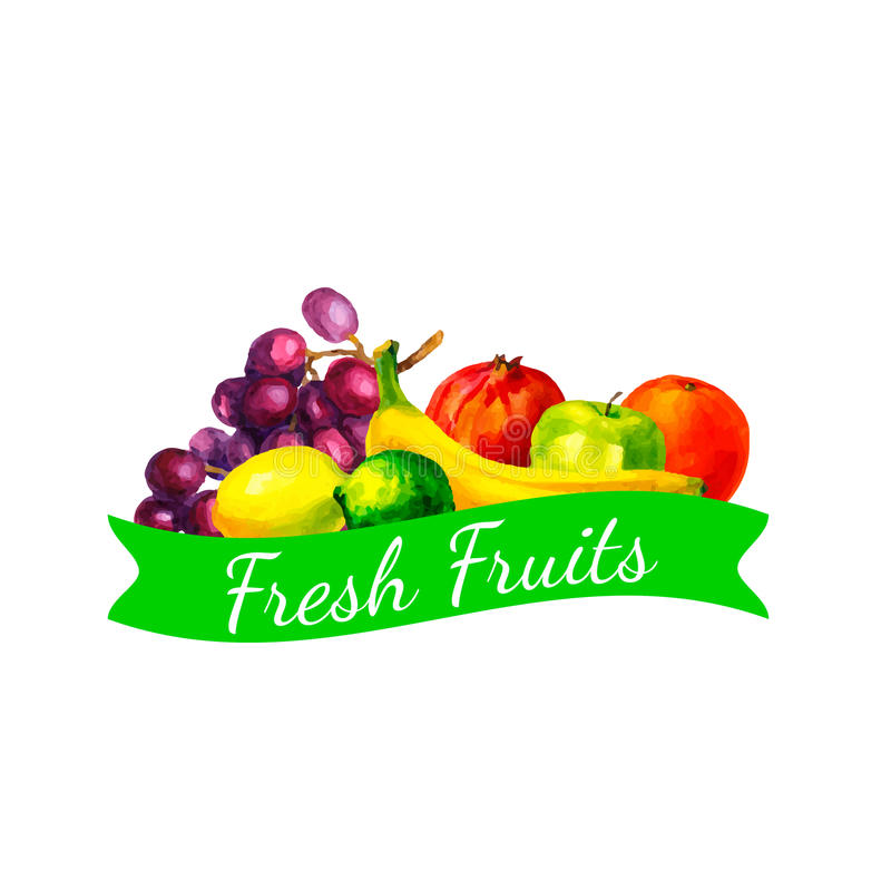 Hand drawn watercolor fresh organic fruits illustration set on white background royalty free illustration