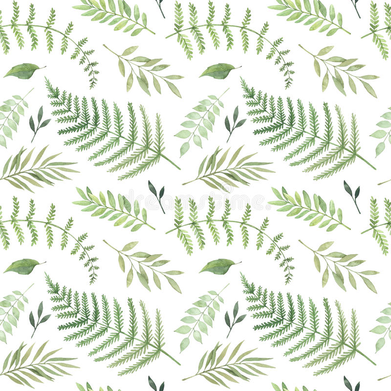 Hand drawn watercolor illustration. Botanical background with gr stock illustration