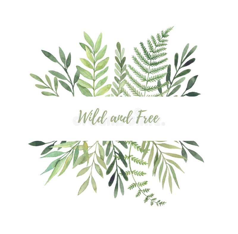Hand drawn watercolor illustration. Botanical label with green l royalty free illustration
