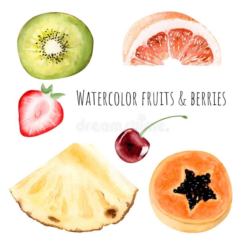 Hand drawn watercolor illustration clipart object kiwi strawberry grapefruit pineapple slice papaya vector illustration