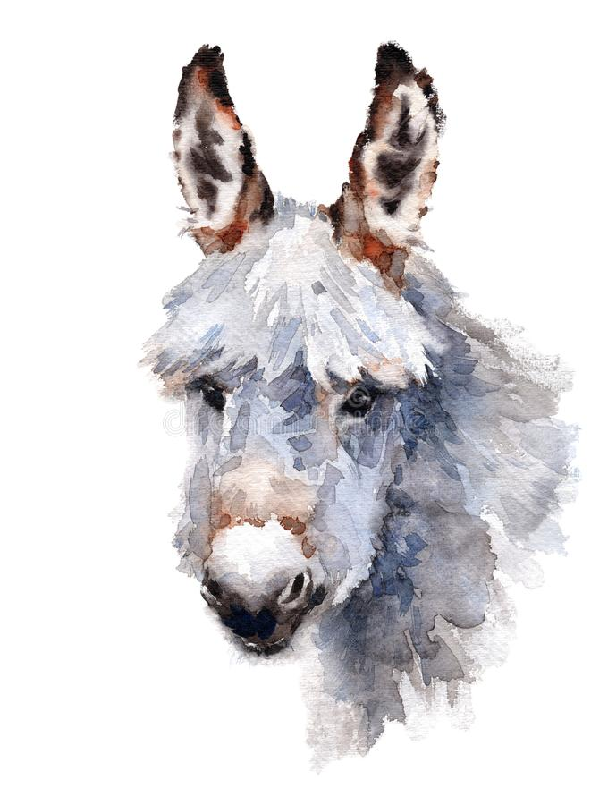 Cute Donkey hand painted watercolor illustration isolated on white background. Hand drawn Watercolor illustration of cute donkey farm animal isolated on white royalty free illustration