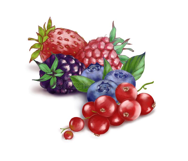Hand drawn watercolor illustration of the food: ripe tasty red currant, blueberry, blackberry, strawberry and raspberry royalty free stock photo
