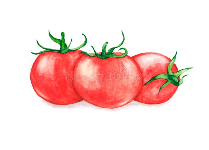 Hand drawn watercolor illustration of fresh three red ripe tomatoes. Isolated on the white background. Vegetarian food product stock photography