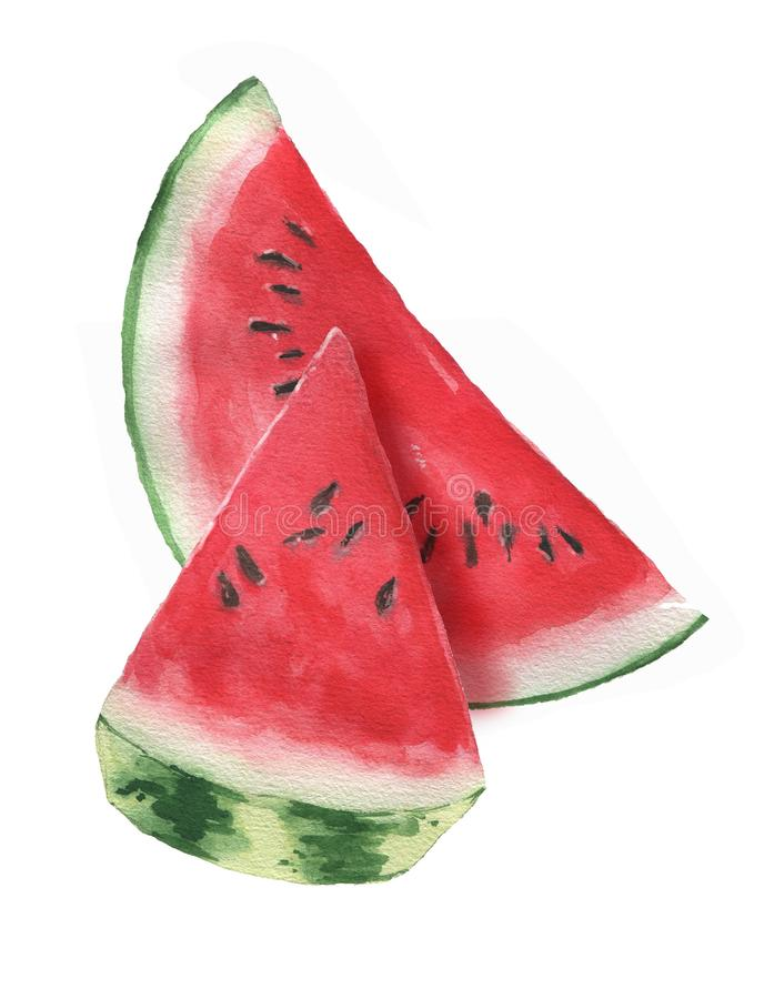 Hand-drawn watercolor illustration of fresh watermelon slice isolated on the white background. Summer harvest - Illustration royalty free illustration