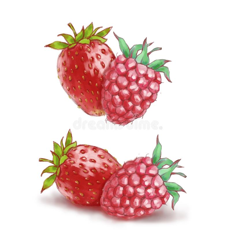 Raspberry and strawberry isolated on the white background vector illustration