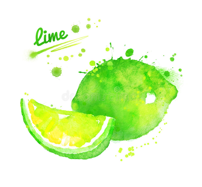 Hand drawn watercolor illustration of lime royalty free illustration