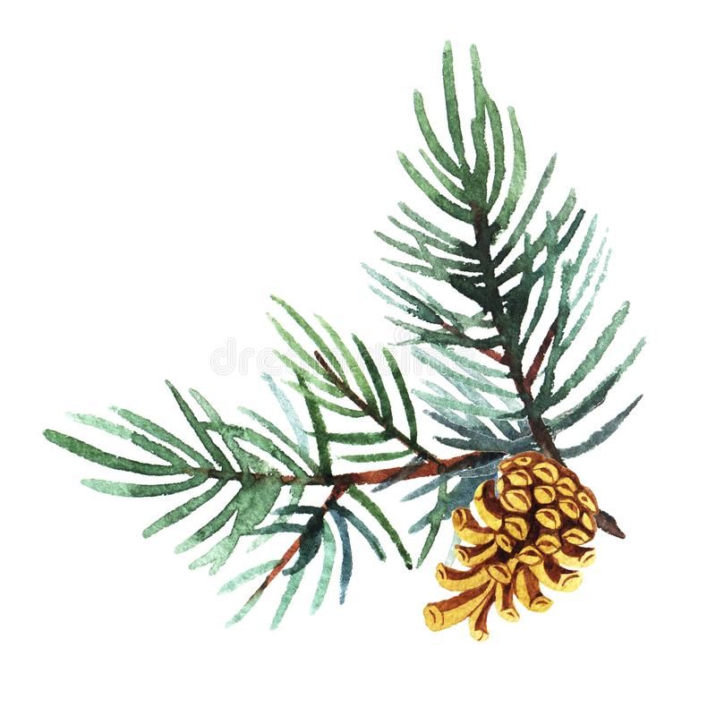 Hand drawn  watercolor illustration of pine branch with cone isolated on white background. Holiday design for greeting cards, calendars, posters, prints stock images