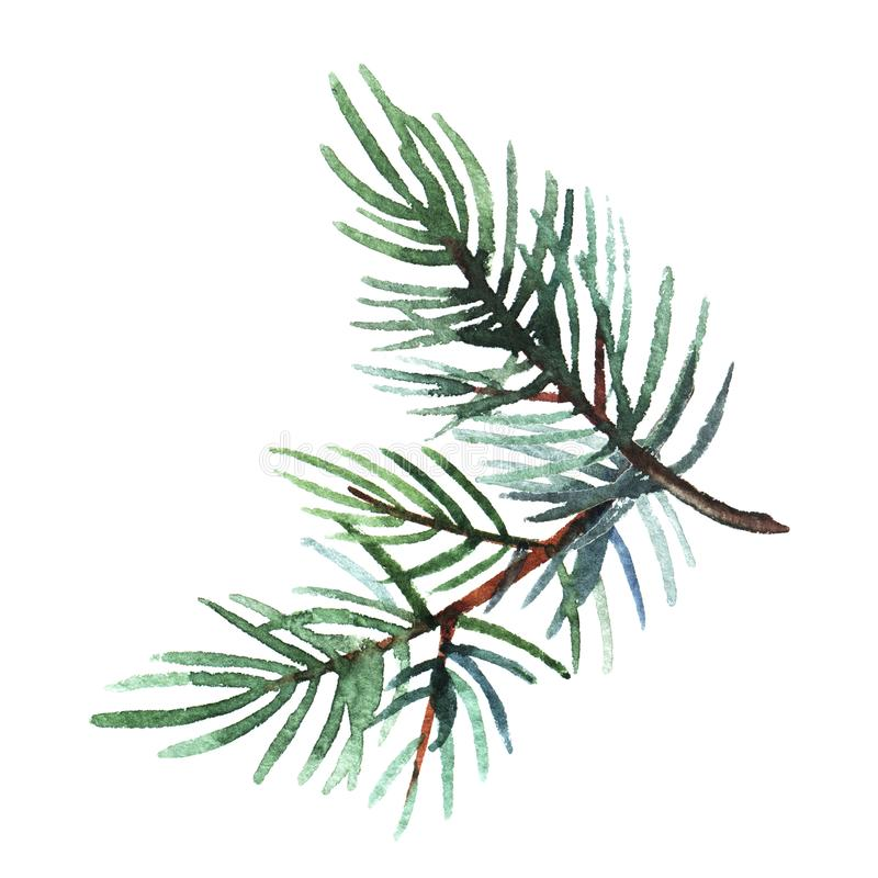 Hand drawn  watercolor illustration of pine branch isolated on white background. Holiday design for greeting cards, calendars, posters, prints, invitations royalty free stock photography
