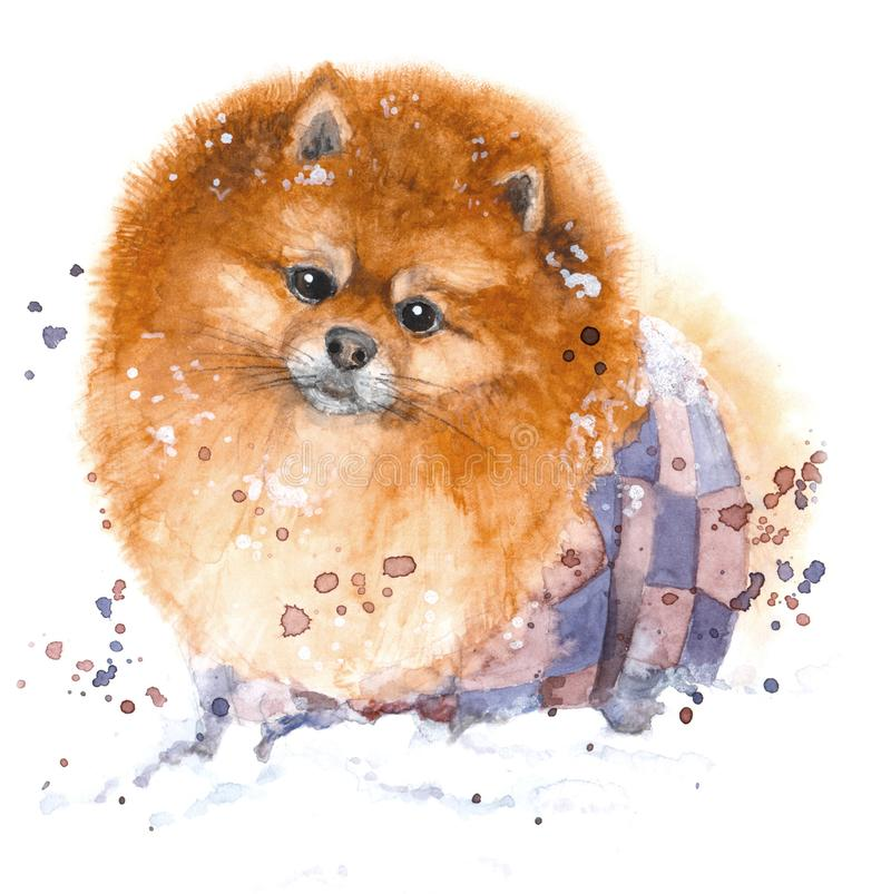 Hand drawn watercolor illustration. Portrait funny, fluffy Spitz with purple sprays. Hand drawn watercolor illustration. Portrait of a funny, fluffy Spitz in royalty free illustration