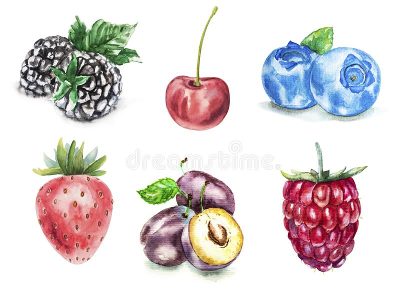 Hand drawn watercolor illustration of ripe summer berries isolated on white background vector illustration