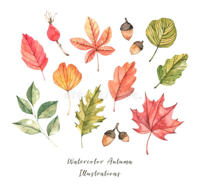 Hand drawn watercolor illustration. Set of fall leaves. Forest d stock illustration
