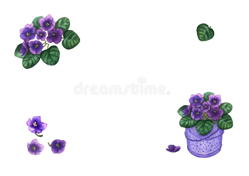 Hand drawn watercolor illustration of violet viola flowers set isolated on the white background royalty free illustration