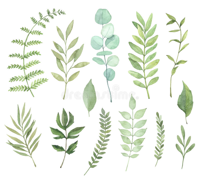 Hand drawn watercolor illustrations. Botanical clipart. Set of G. Reen leaves, herbs and branches. Floral Design elements. Perfect for wedding invitations