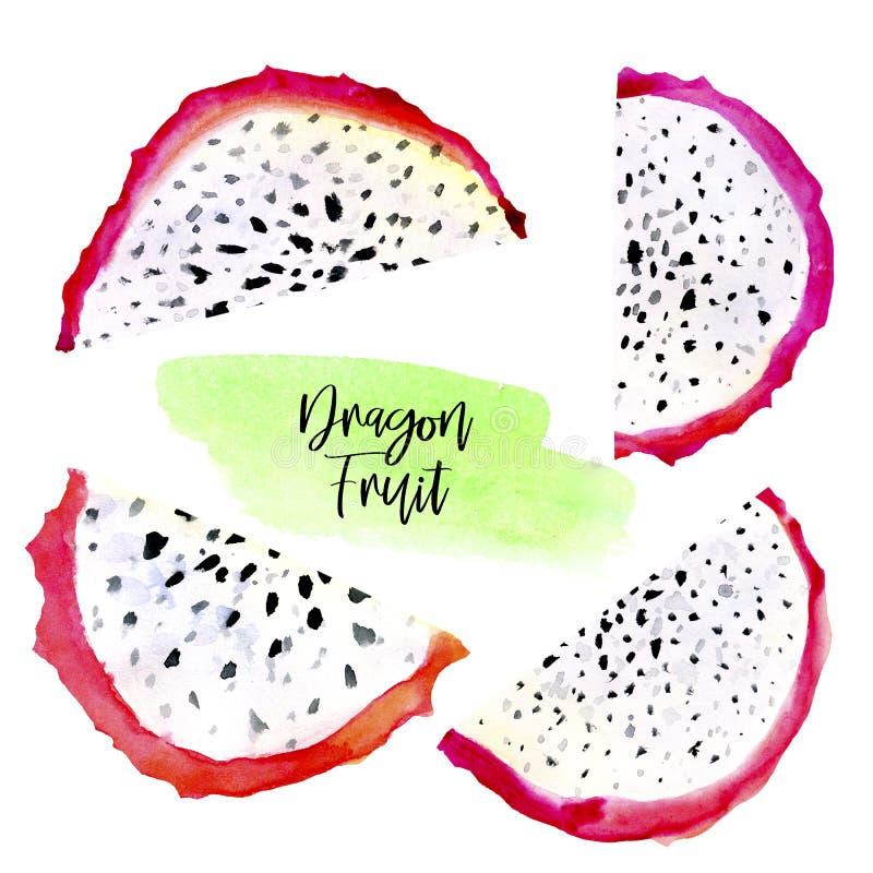 Hand drawn watercolor illustrations of dragon fruits pitaya slice isolated on white background. Pitahaya. Summer food. Illustration, tropical fruit. Healthy stock illustration
