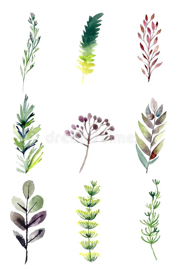 Hand drawn watercolor illustrations isolated on white background. stock illustration