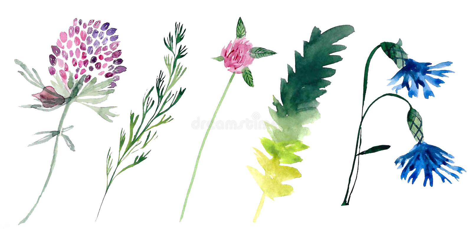 Hand drawn watercolor illustrations isolated on white background. royalty free stock photography