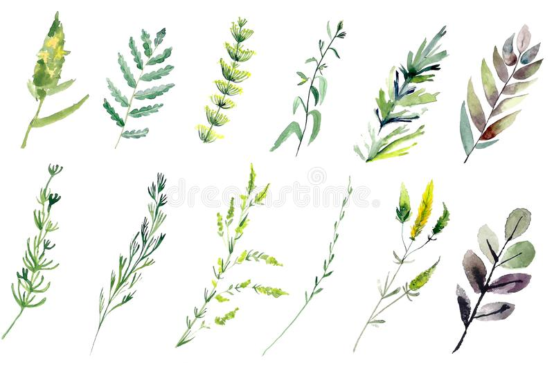 Hand drawn watercolor illustrations isolated on white background. royalty free illustration
