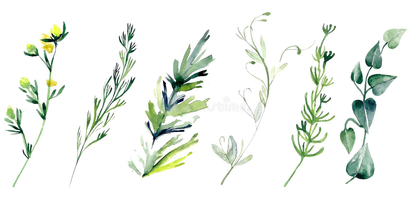 Hand drawn watercolor illustrations isolated on white background. royalty free stock photo