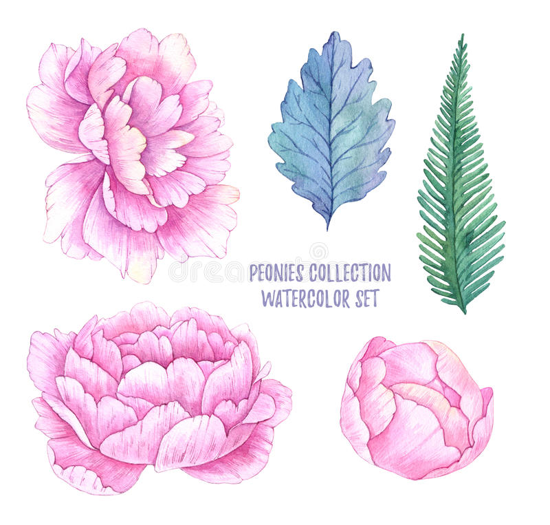 Hand drawn watercolor illustrations. Spring leaves and peonies f stock illustration