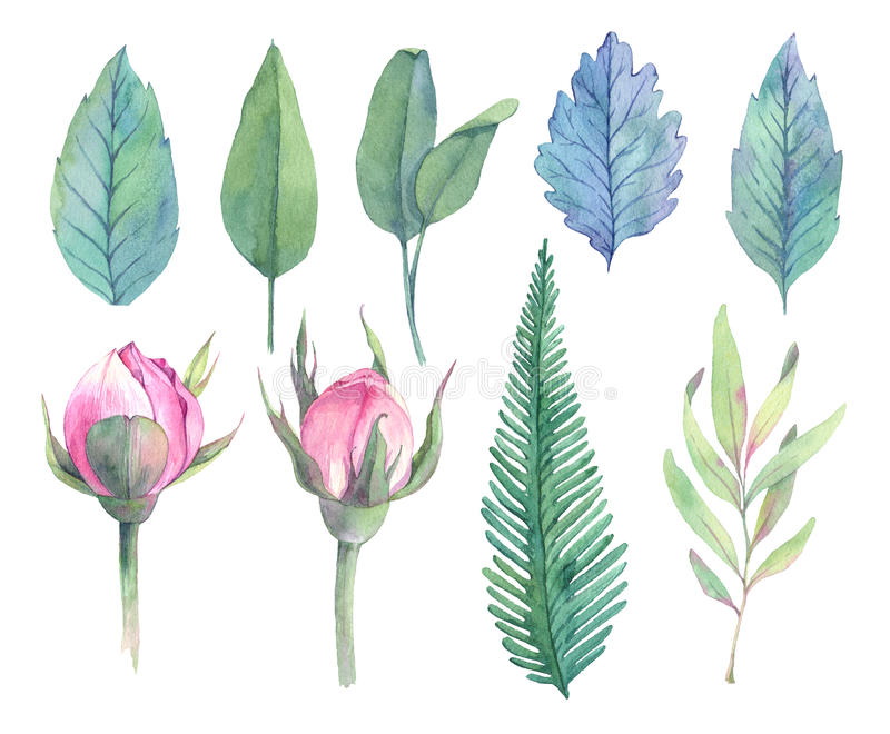 Hand drawn watercolor illustrations. Spring leaves and Peony bud vector illustration