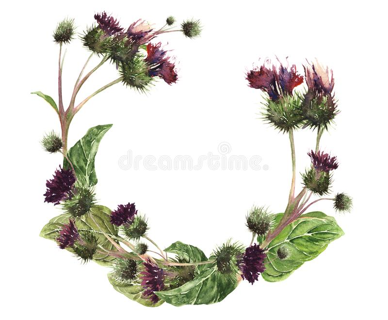 Hand drawn watercolor isolated wreath of a colorful gentle meadow thistle. Botanical vintage watercolor illustration. Design for c vector illustration