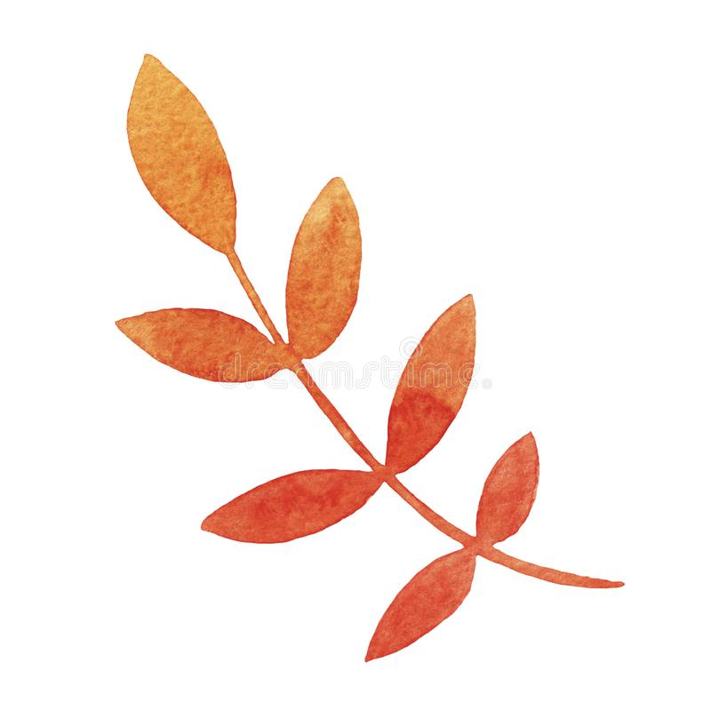 Hand drawn watercolor orange rowan leaf isolated on white background. stock illustration