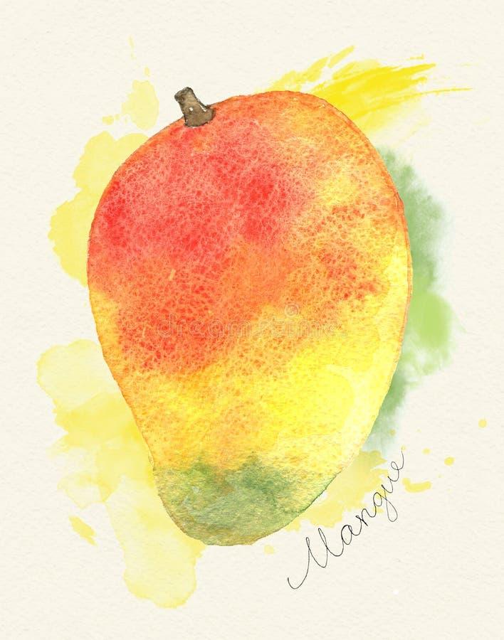 Hand drawn watercolor painting on Mango fruit stock illustration