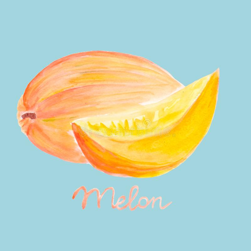 Hand Drawn Watercolor Painting. Melon with slice isolated on blue background. Watercolor Illustration for Your Design. Hand Drawn Watercolor Painting. Melon vector illustration