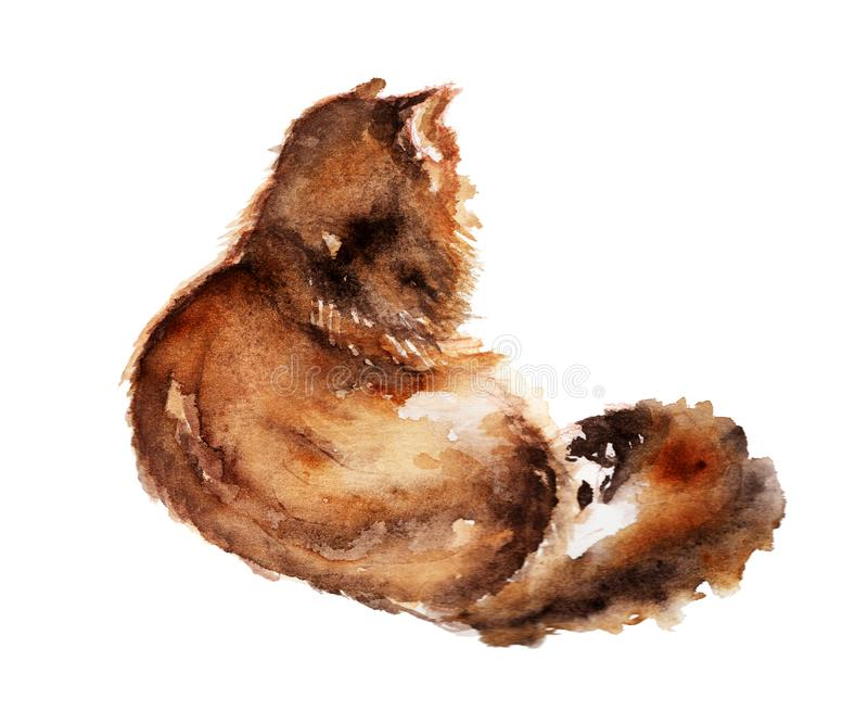 Hand drawn watercolor painting sitting fur cat on white background. royalty free illustration