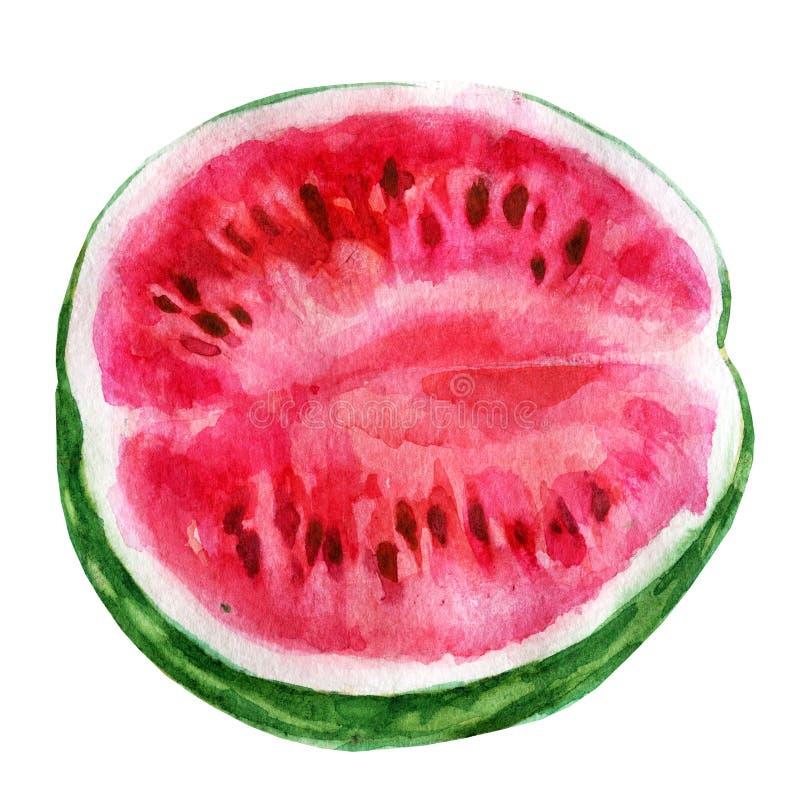 Watercolor illustration. Half a watermelon. royalty free illustration