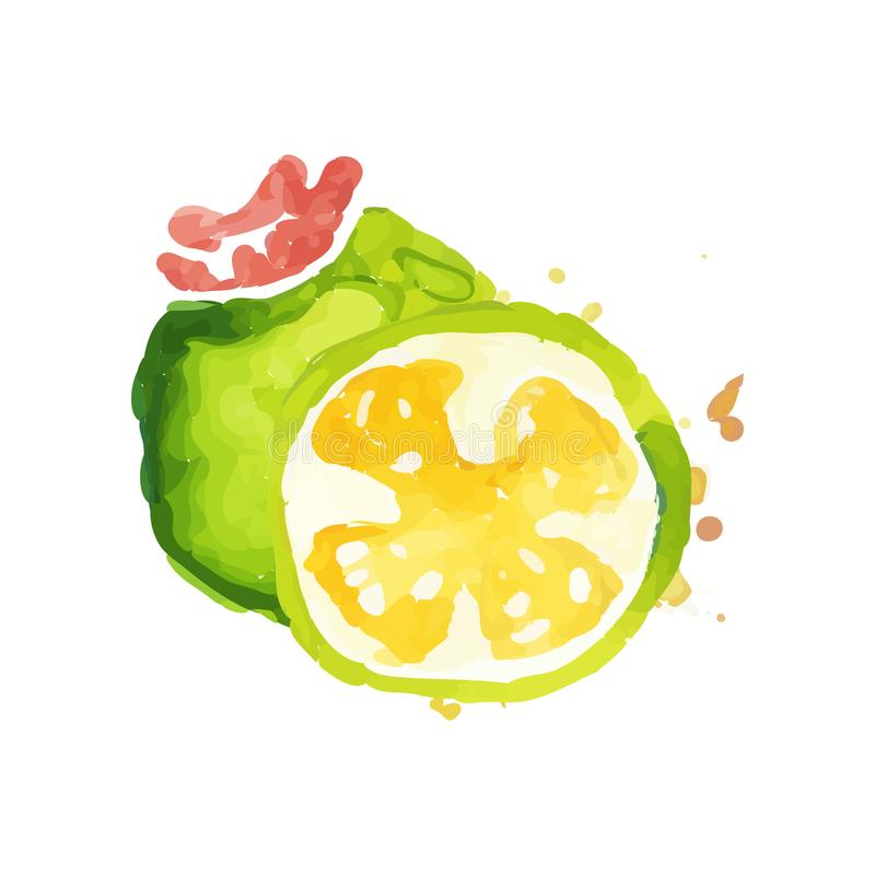 Hand drawn watercolor painting with whole and slice of juicy feijoa. Healthy nutrition. Organic and tasty food. Tropical stock illustration
