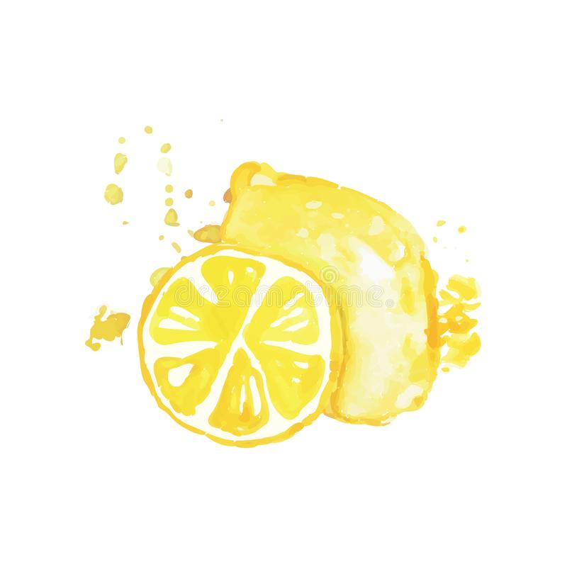 Hand drawn watercolor painting of whole and slice of lemon. Citrus fruit. Organic and tasty food. Healthy nutrition vector illustration